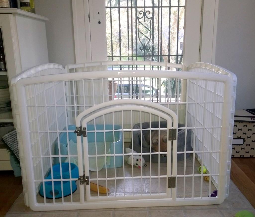 Dog Kennel Setups